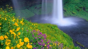 palmlix.com-seljalandsfoss-falls-and-wildflowers-iceland-flower-images-small